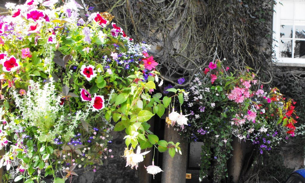 Cumbria in Bloom 2014 (96) resized